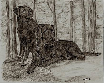 Joan Pye - Black Labs