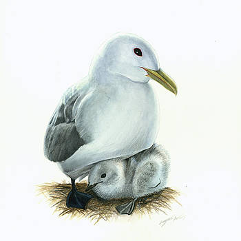 Black-legged Kittiwake Parent and Chick by Logan Parsons