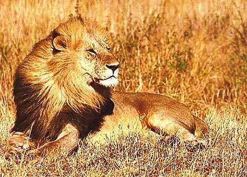 Diane Kurtz - Black Maned Lion
