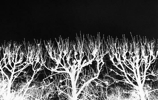 Black Sky Seine Trees by Tamarra Tamarra