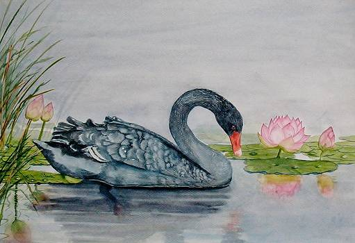 Black Swan by Shashikanta Parida