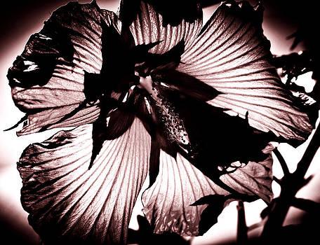 Black White   Shadow Light by Steve Buckenberger