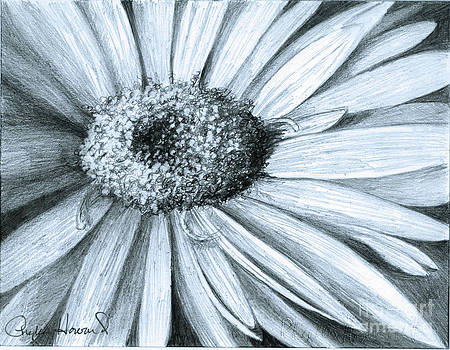Phyllis Howard - Black White Gerber