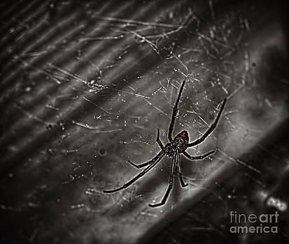 Black Widow by Jeremy Linot