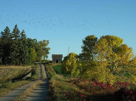 Blackbird Autumn Road by Brian  Maloney