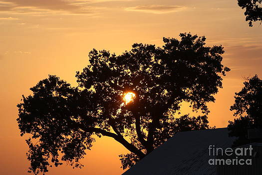 Blazing Orange Sky Tree silhouette by Robert D  Brozek