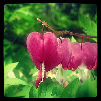 Bleeding Heart by Christy Bruna