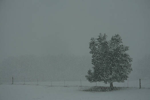 Blizzard Conditions by James Corley