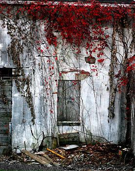 Blood Ivy by Mark Orr