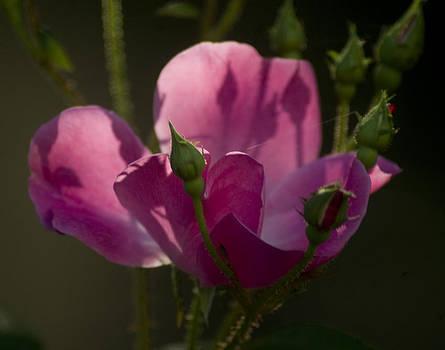 Bloom Again in Autumn by Bernadette Kazmarski