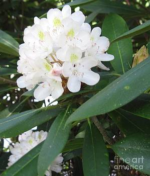 Bloom in June by Amy Kinley