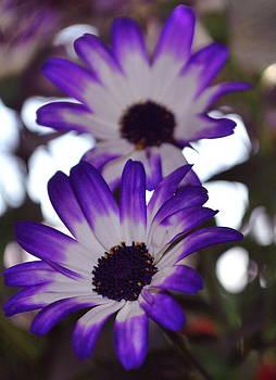 Michelle Cruz - Bloom in Spring