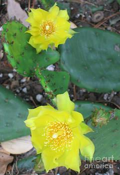 Blooming Cactus by Marlene Robbins