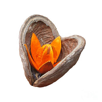 Blooming Heart. Square Format. by Ausra Huntington nee Paulauskaite