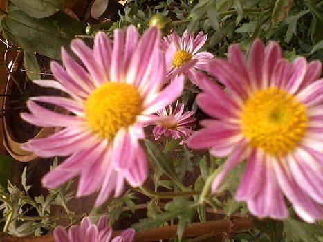 Blooming Pink by Amisha Tripathy