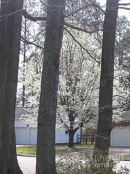 Blooming Tree by Marlene Robbins