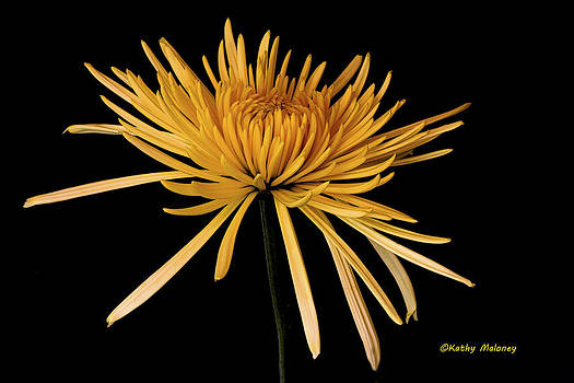 Blooming Yellow by Kathy Maloney