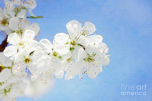 LHJB Photography - Blossom