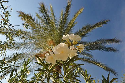 Blossom by Slavi Begov