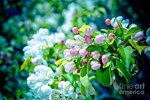 Christina Klausen - Blossoms