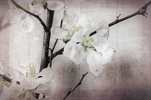 Blossoms in a Japanese Style by Stephen Walker