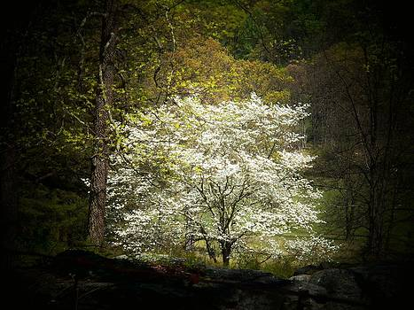 Blossoms of White by Joyce Kimble Smith
