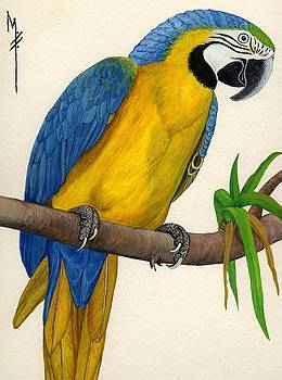 Blue and Gold Macaw by Marsha Friedman