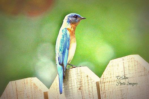 Blue Bird by Debbie Sikes