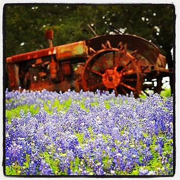 Blue Bonnets Engulfing A Rusty 'ole by Jeff Jordan