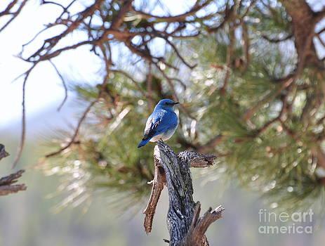 Blue Boy by Dorrene BrownButterfield