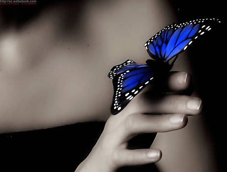 Terry Sita - Blue butterfly
