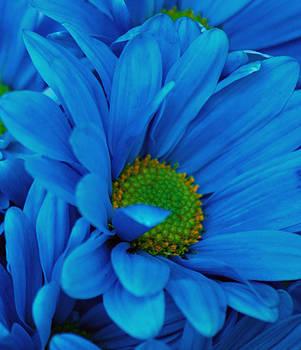 Michelle Cruz - Blue Daisy