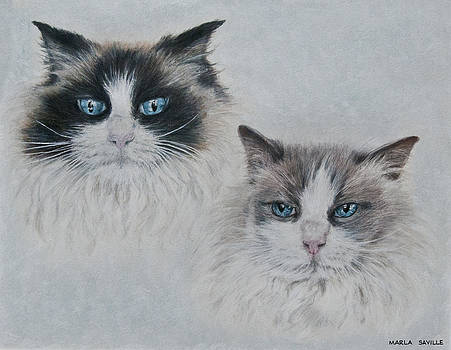 Blue Eyed Cats by Marla Saville