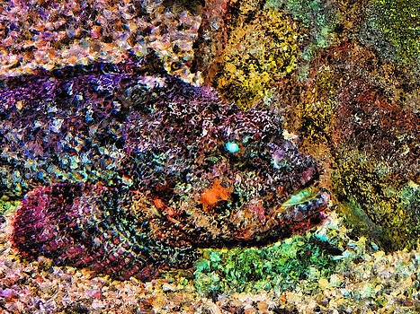 Blue Eyed Fish by Jeff Breiman