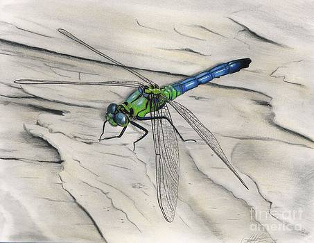 Christian Conner - Blue-Green Dragonfly