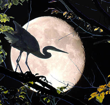 Amalia Jonas - Blue Heron and Blue moon