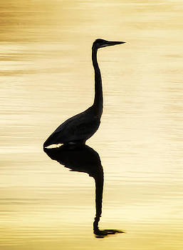 Blue Heron at Dusk by Steve Smith