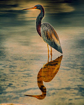 Blue Heron by Jackee Swinson