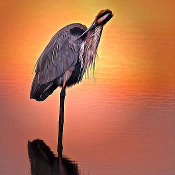 Blue Heron Sunset by Robert Wicker