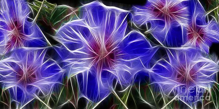 Peter Piatt - Blue Hibiscus Fractal
