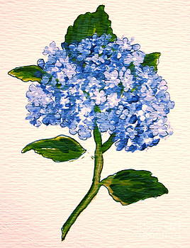 Blue Hydrangea by Leea Baltes