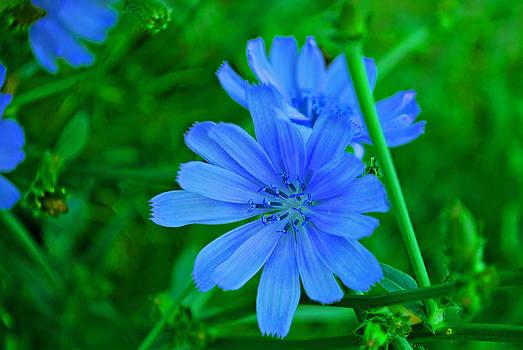Michelle Cruz - Blue in Bloom