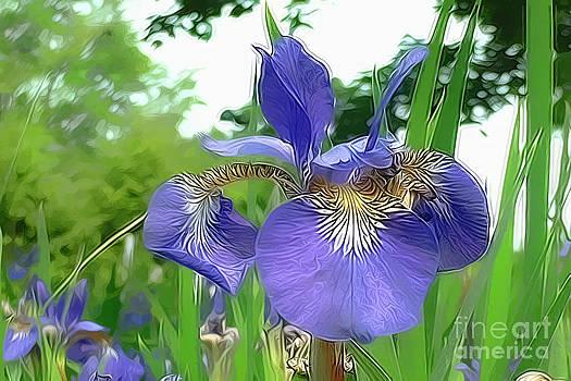 Blue Iris by Bruce Wood
