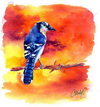 Christy  Freeman - Blue Jay Bird on a Wire