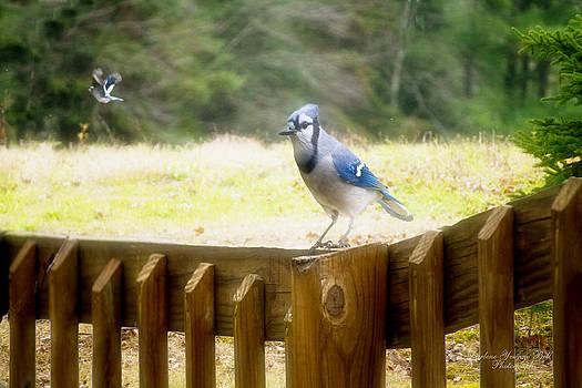 Darlene Bell - Blue Jays