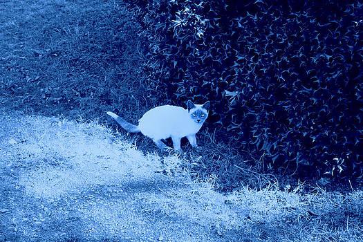 Nina Fosdick - blue kitty