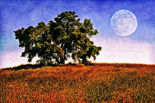 Blue Moon Morning by Donna Pagakis