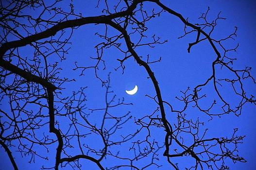 Blue Moon by Ryan Louis Maccione