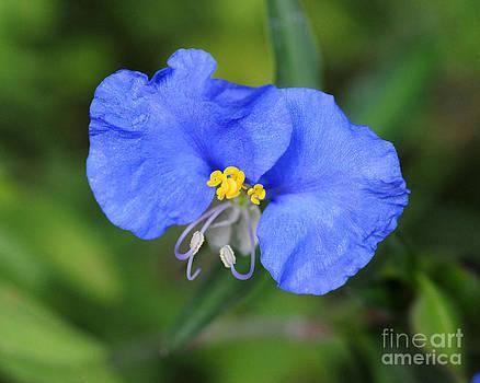 Blue Morning by David Chalker