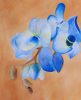 Donna Walsh - Blue Mystique Orchid